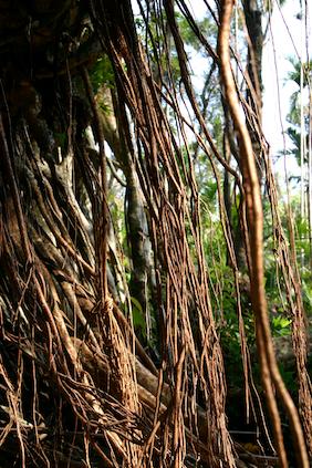 Bridge roots