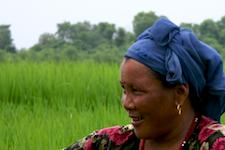 Sauraha Farmers
