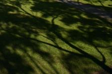 Lemon Scented Lawns