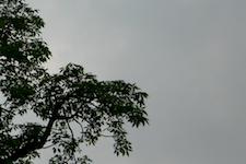 Chitwan Flora