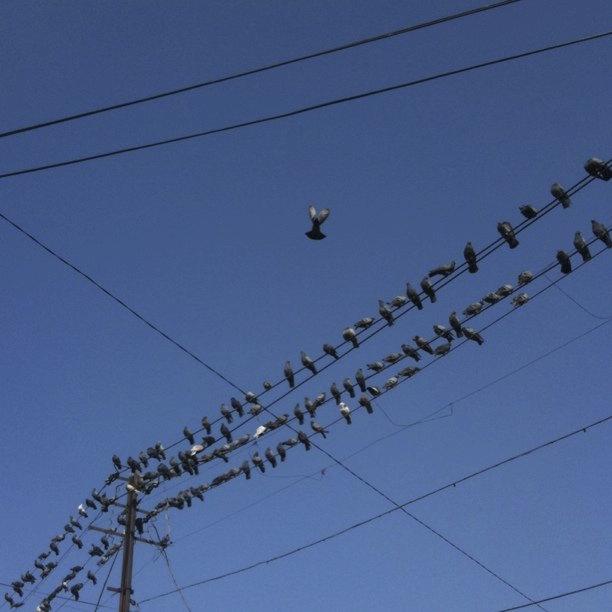 Bistupur Birds